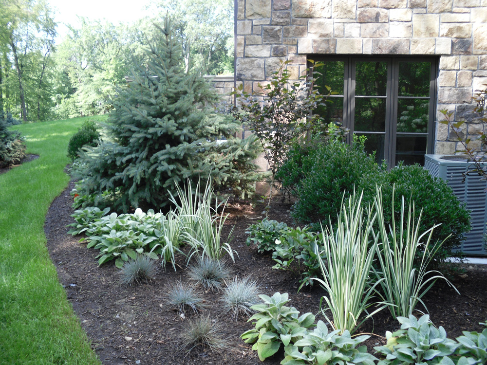 Image of: Evergreen Landscaping Ideas