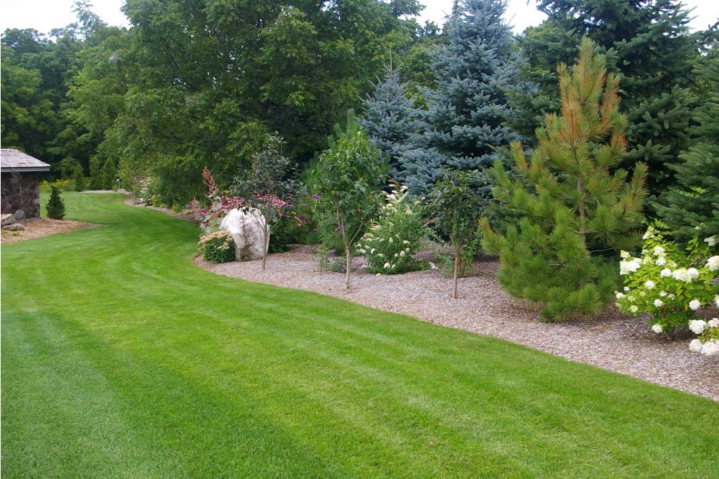 Image of: Good Evergreen Landscaping