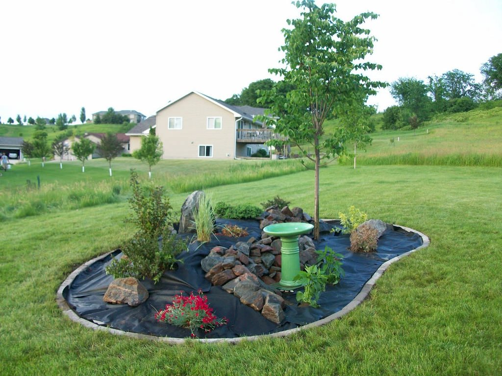 Image of: Small Evergreen Landscaping