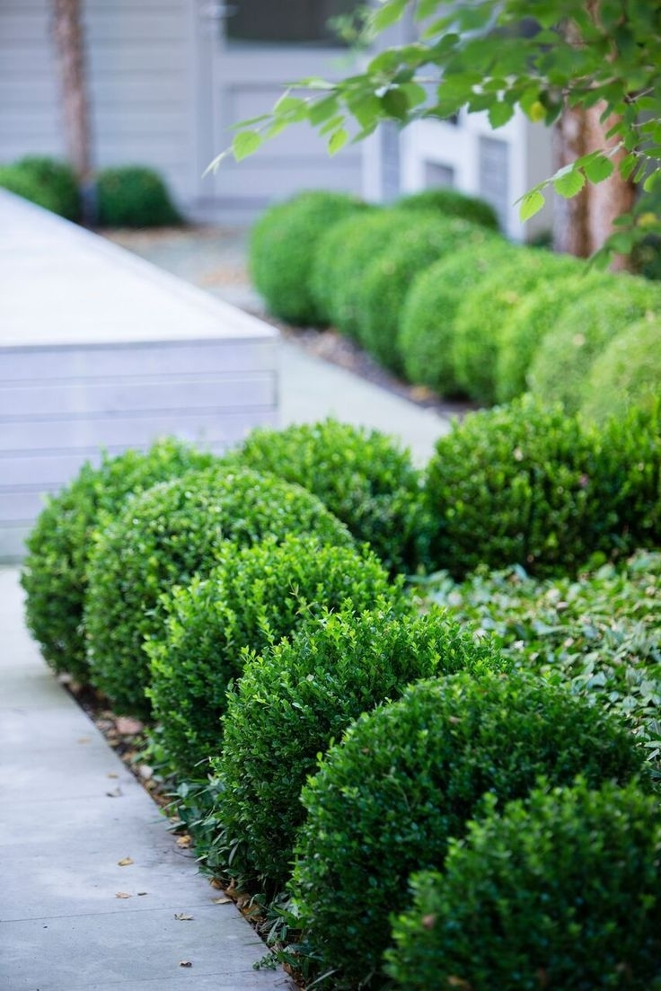 Image of: Perennials In Front Of Boxwood Landscaping Design Ideas