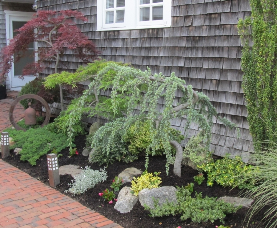 Image of: Dwarf Spruce Trees For Landscaping