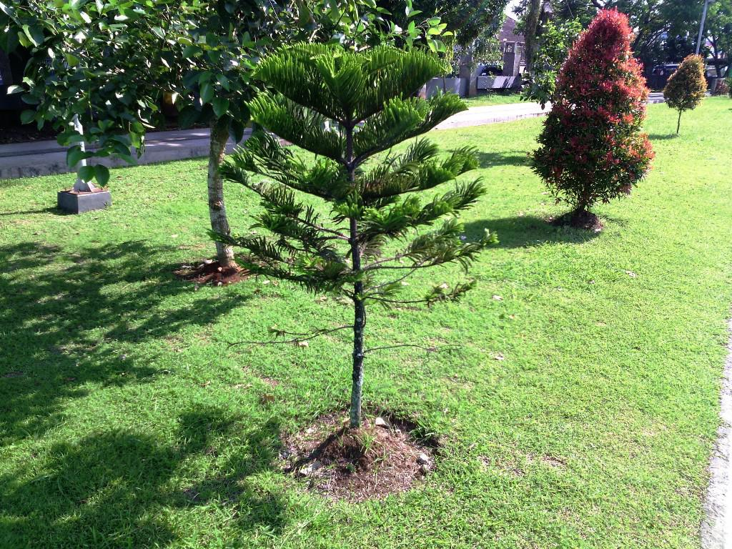 Image of: Dwarf Trees For Landscaping Near House