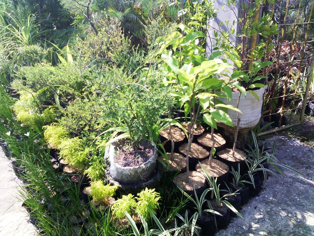 Image of: Dwarf Trees For Landscaping Zone 4