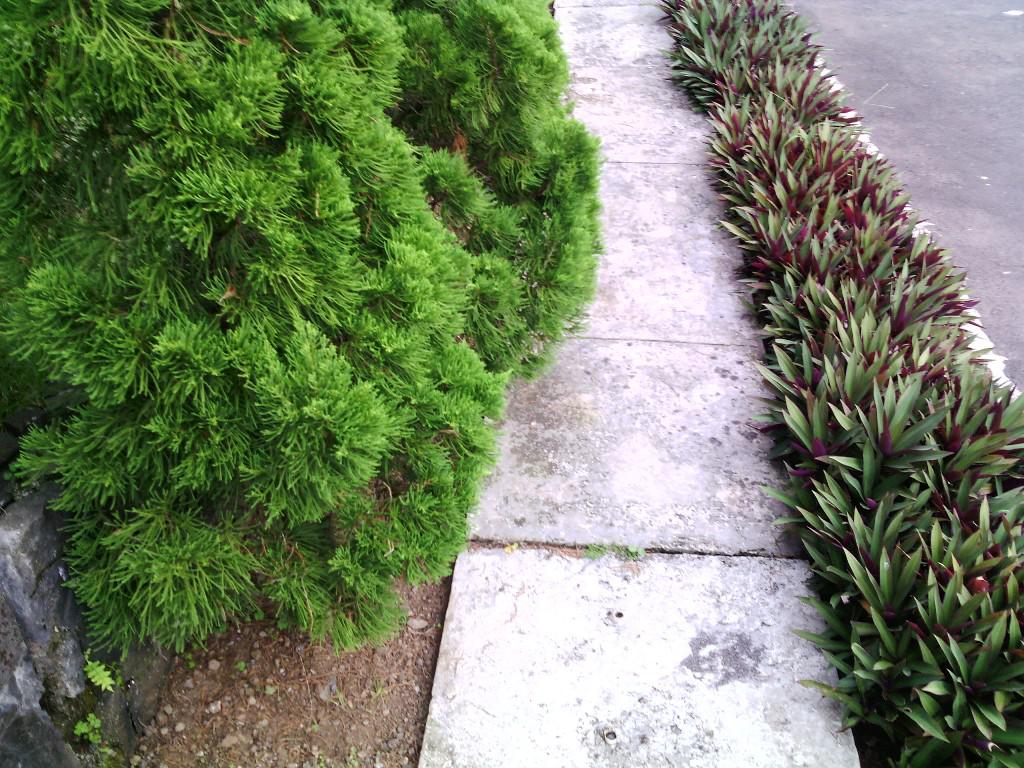 Image of: Dwarf Trees For Landscaping Zone 7