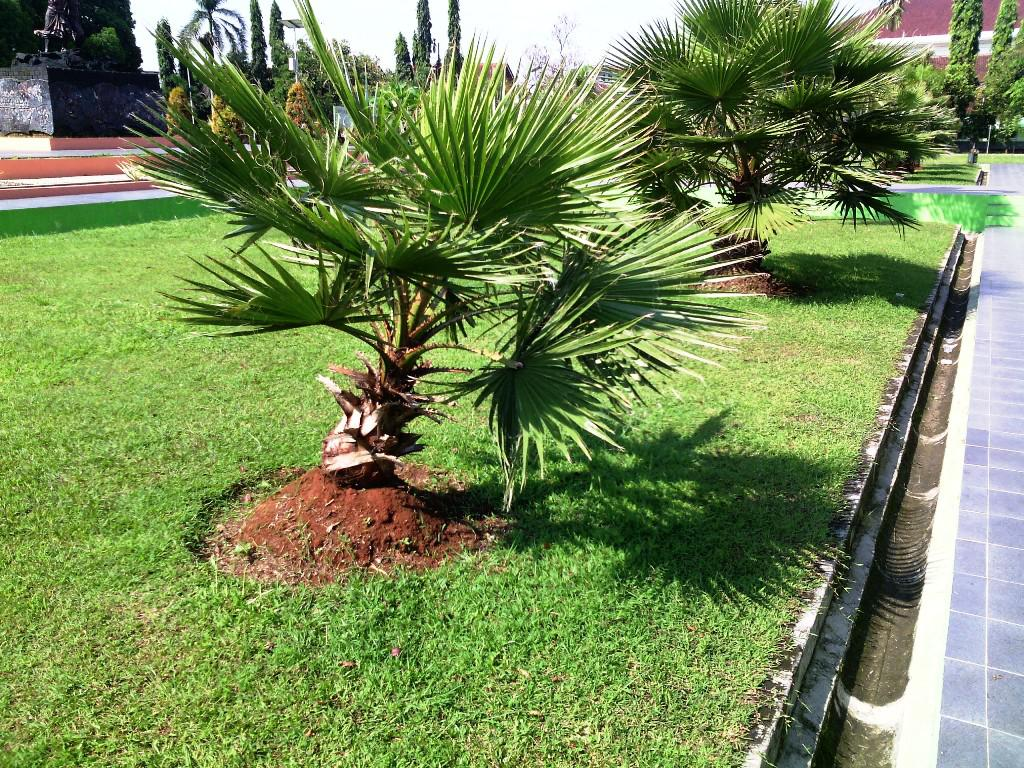 Image of: Dwarf Trees For Landscaping Zone 9