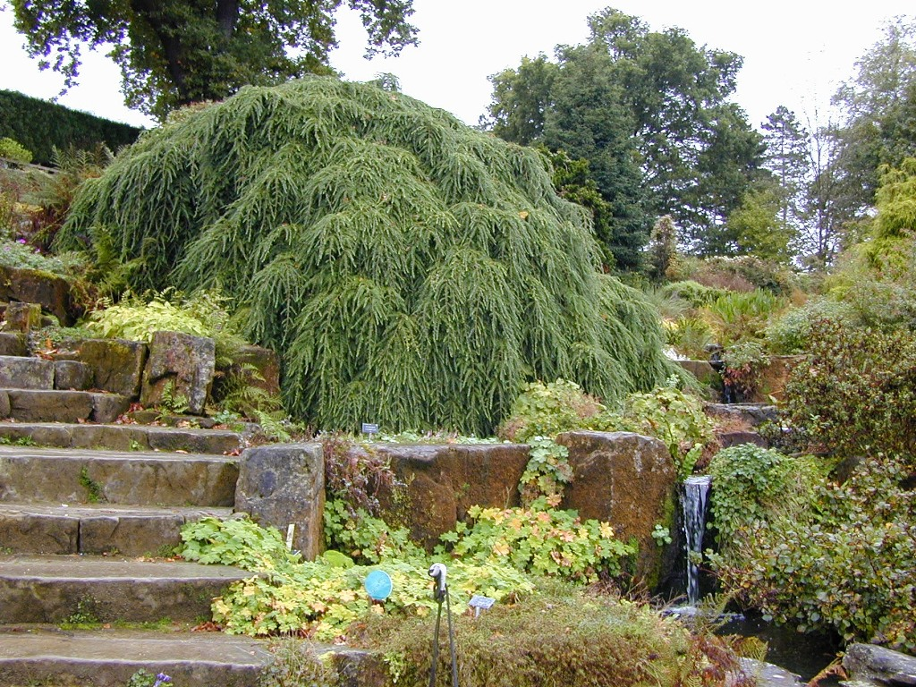 Dwarf Weeping Trees For Landscaping