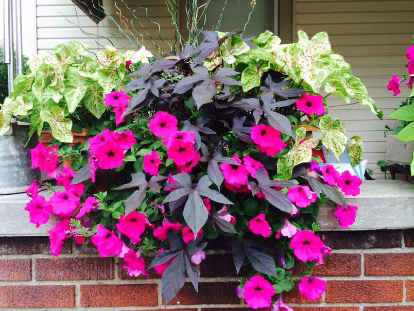 Image of: Beautiful Front Porch Flowers Design