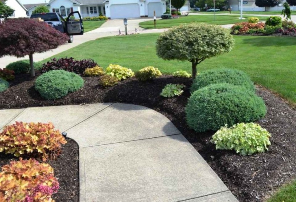 Image of: Bushes For Landscaping In Florida