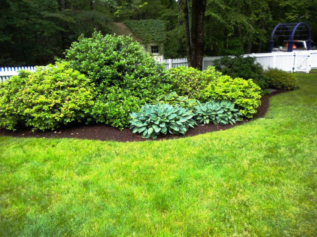 Image of: Bushes For Landscaping Photos