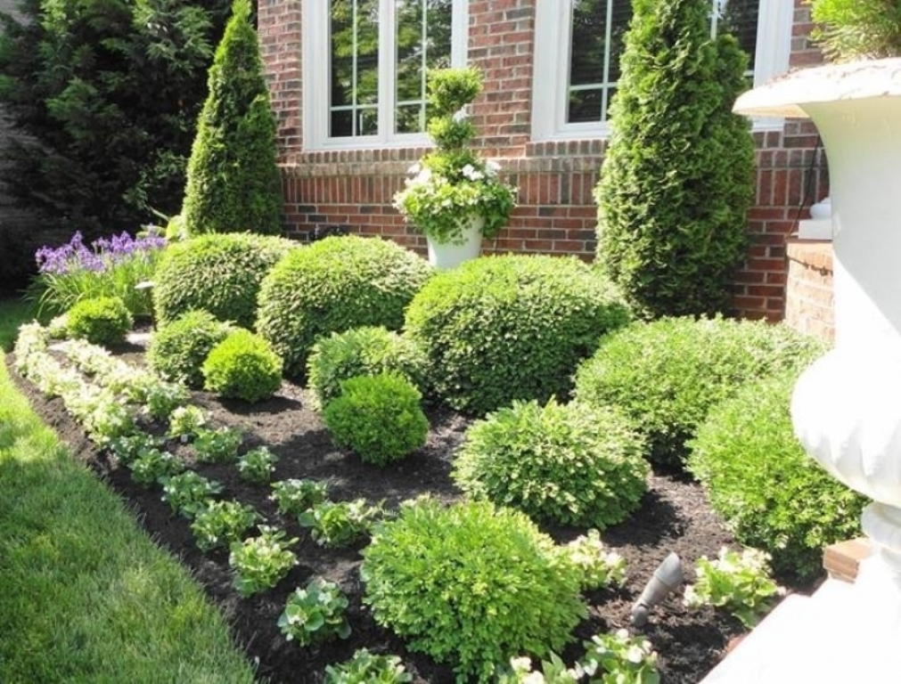 Image of: Bushes For Landscaping Privacy