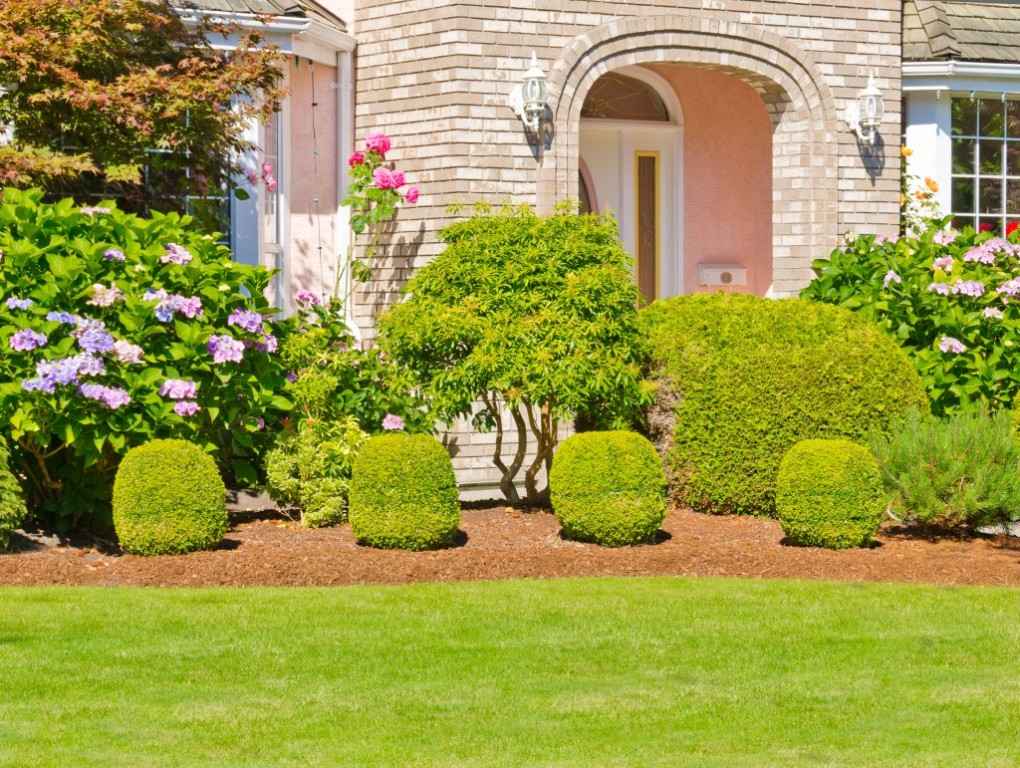 Image of: Common Bushes For Landscaping