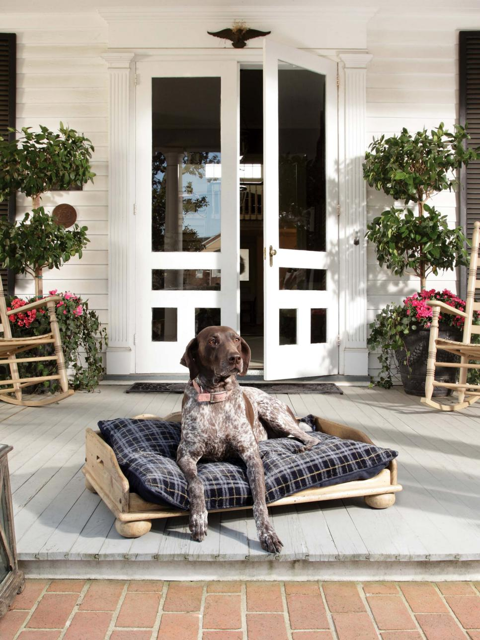 Image of: Dog On Front Porch Decorating