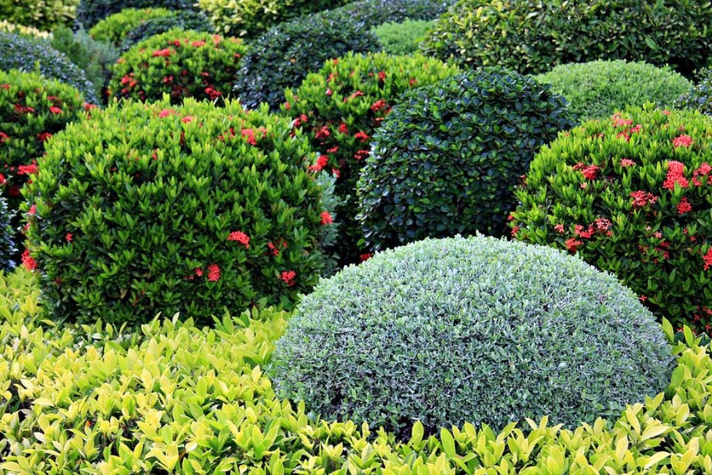 Image of: Evergreen Bushes For Landscaping