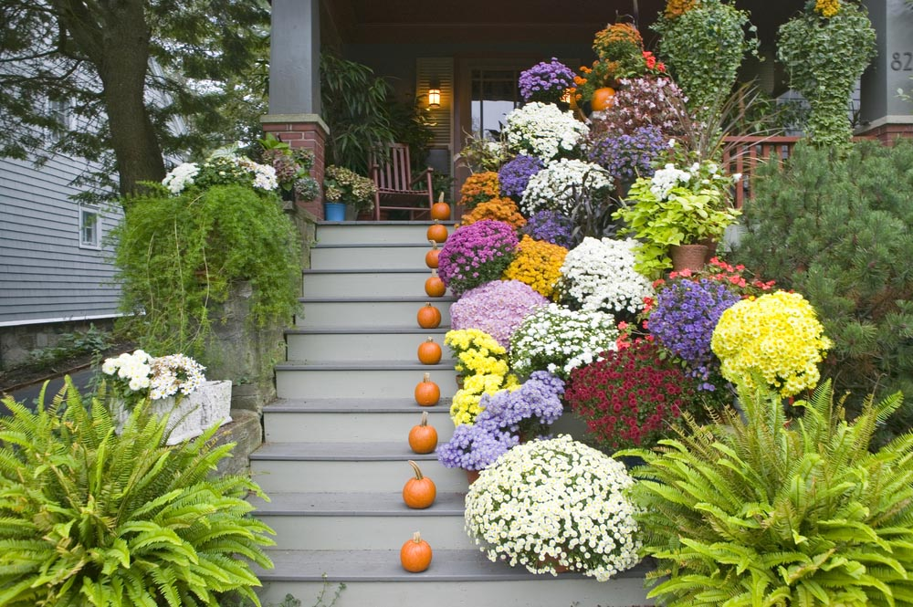 Image of: Front Porch Landscaping Ideas Garden