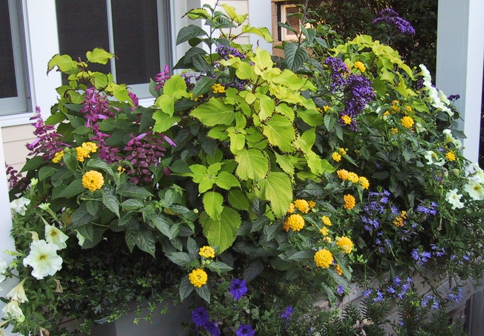 Image of: Front Porch Planters Container