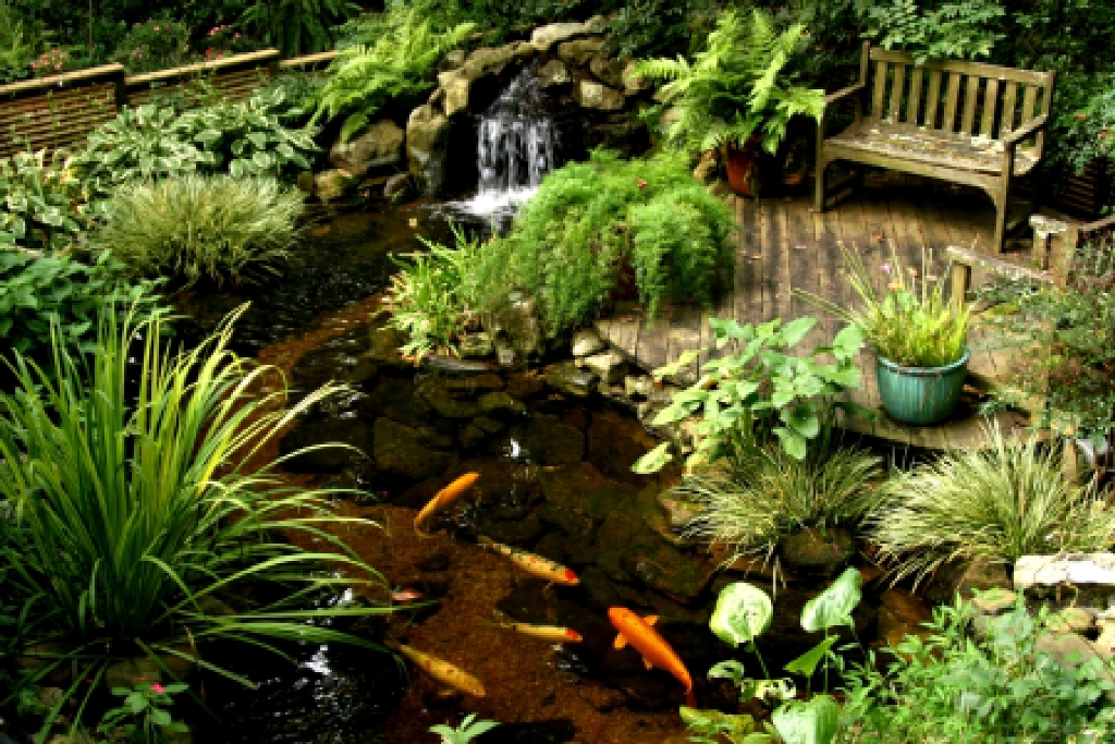 Image of: Goldfish Pond Landscaping Ideas