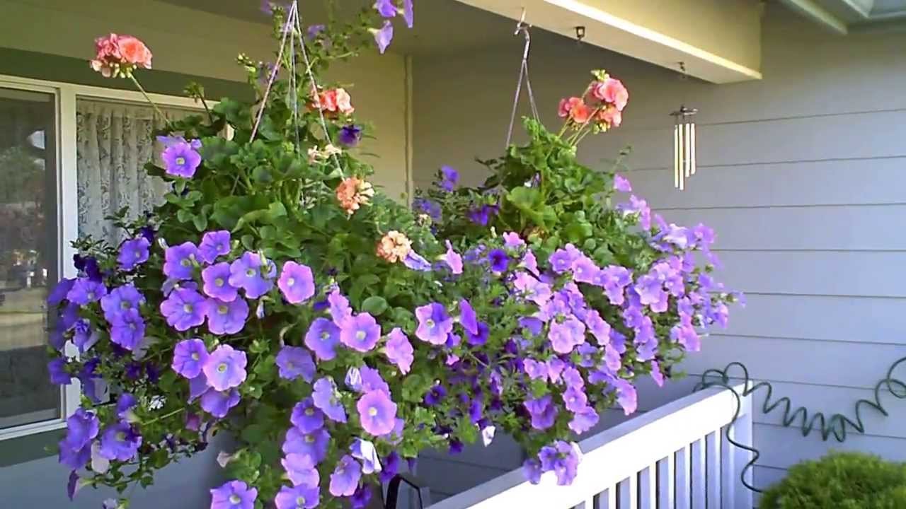 Image of: Nice Front Porch Flowers Style
