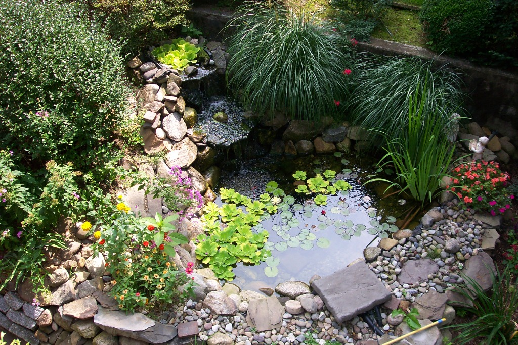Image of: Pond Backyard Ideas