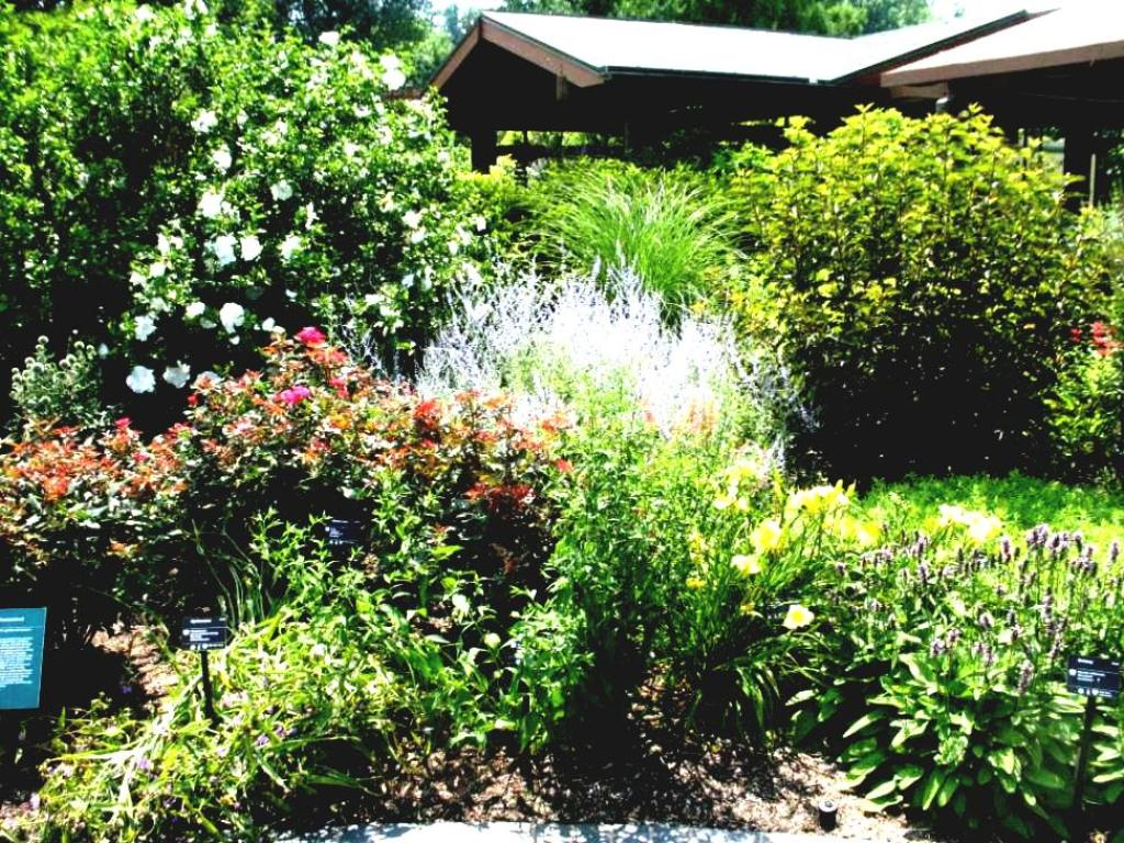 Image of: Small Bushes For Landscaping