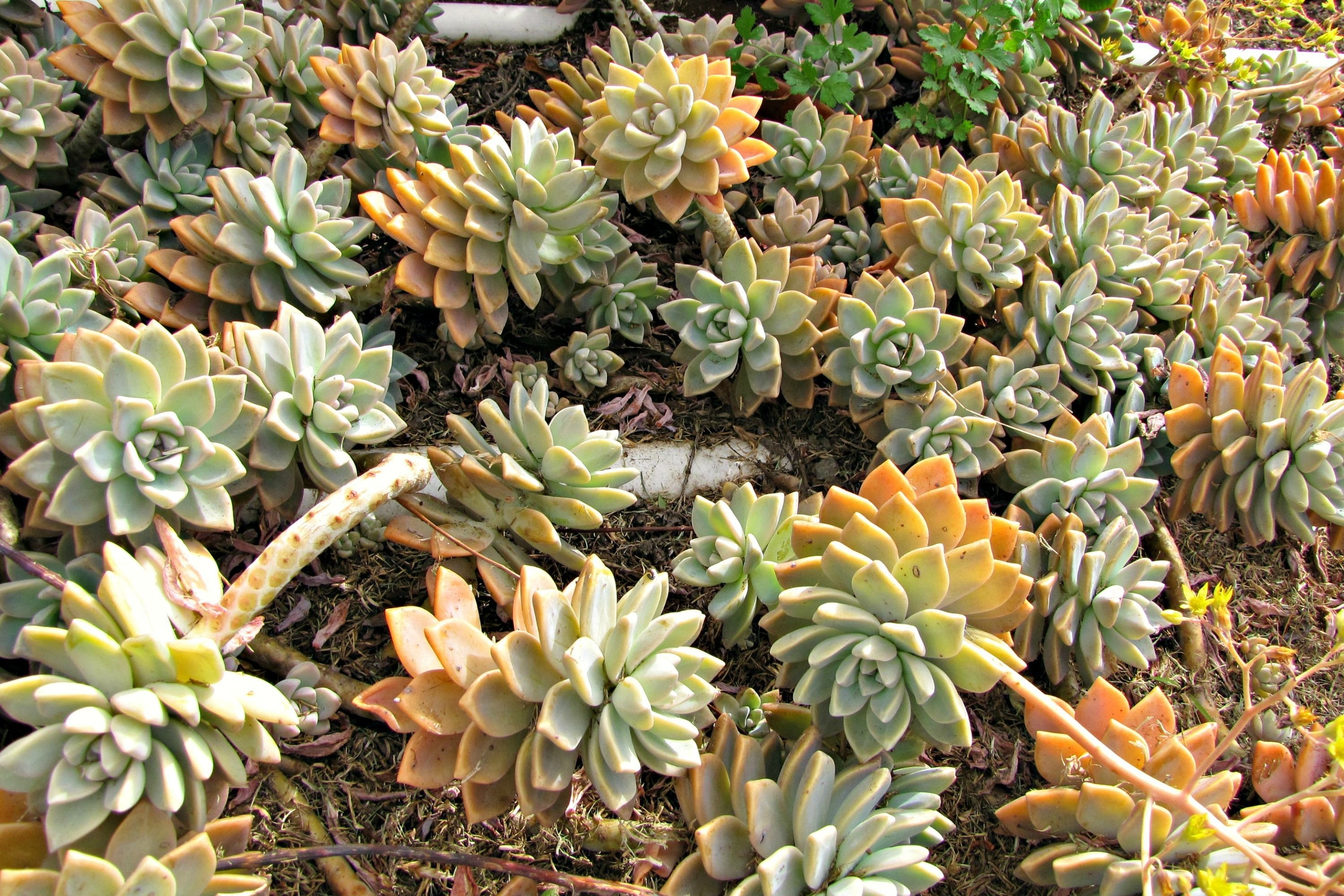 Choose The Best Succulents For Landscaping Throughout Landscaping With Succulents Landscaping With Succulents Plant Ideas