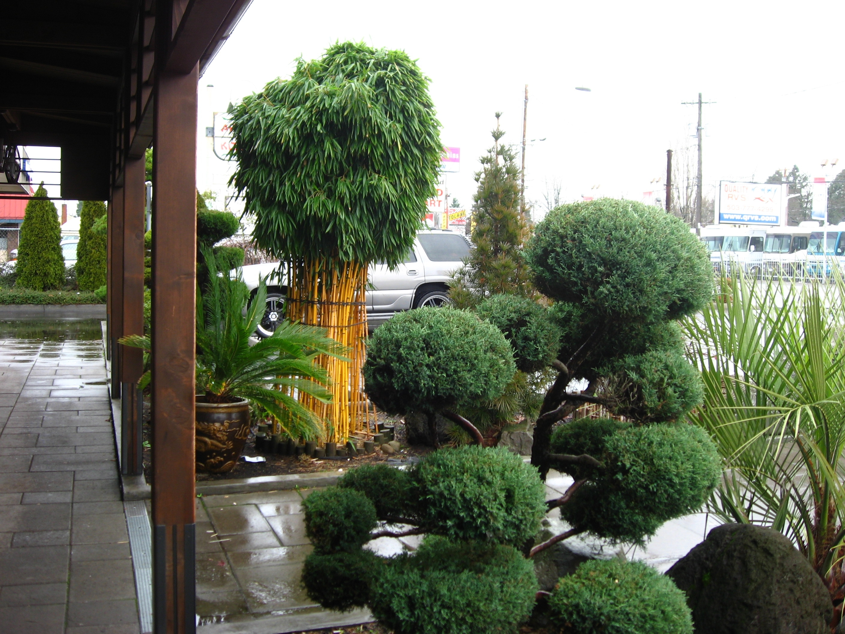 Image of: Growing And Maintaining Bamboo Intended For Bamboo Landscaping Bamboo Landscaping As A Plant