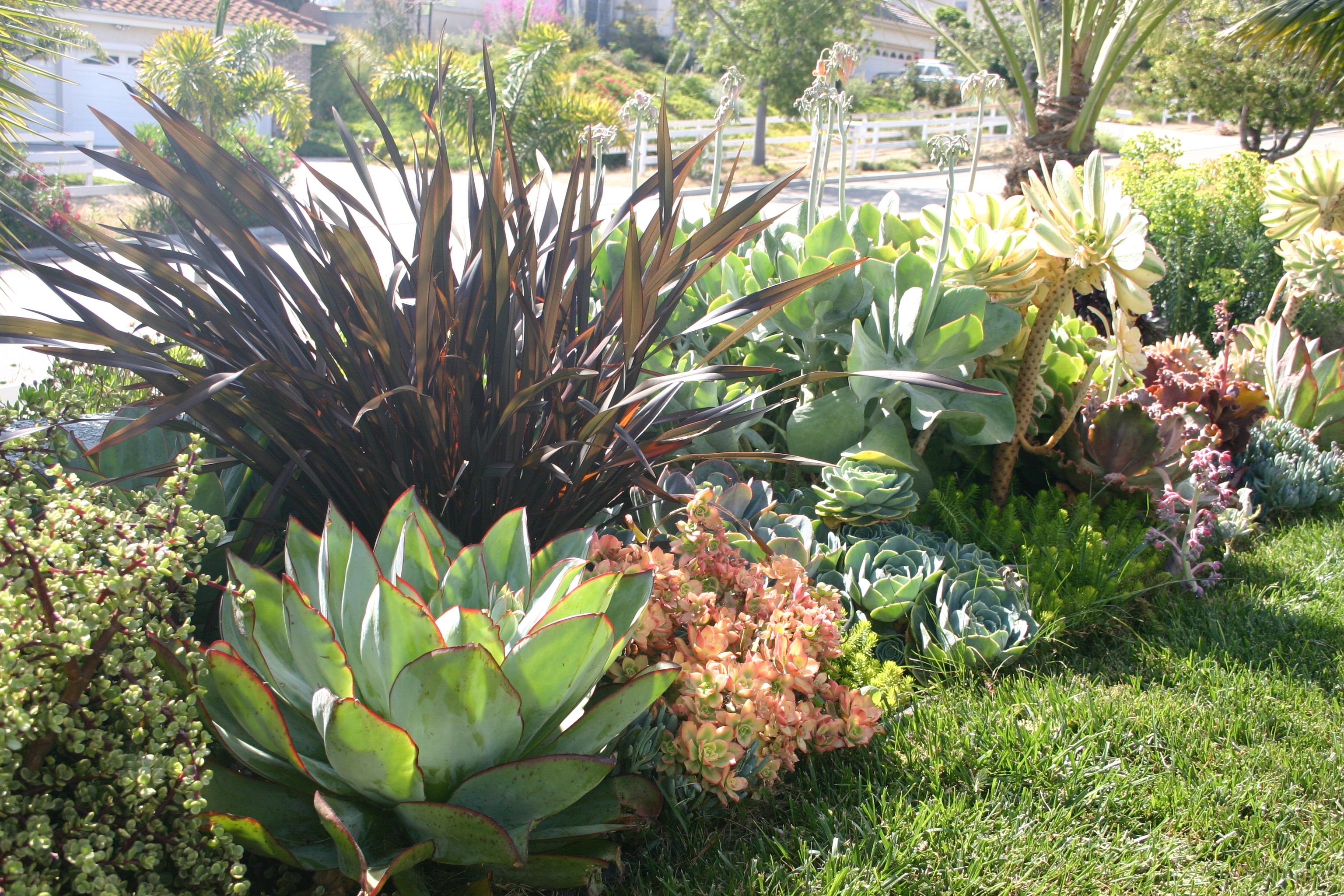 Image of: Inspirations Rainbow Succulents Succulent Landscaping Grass For Landscaping With Succulents Landscaping With Succulents Plant Ideas