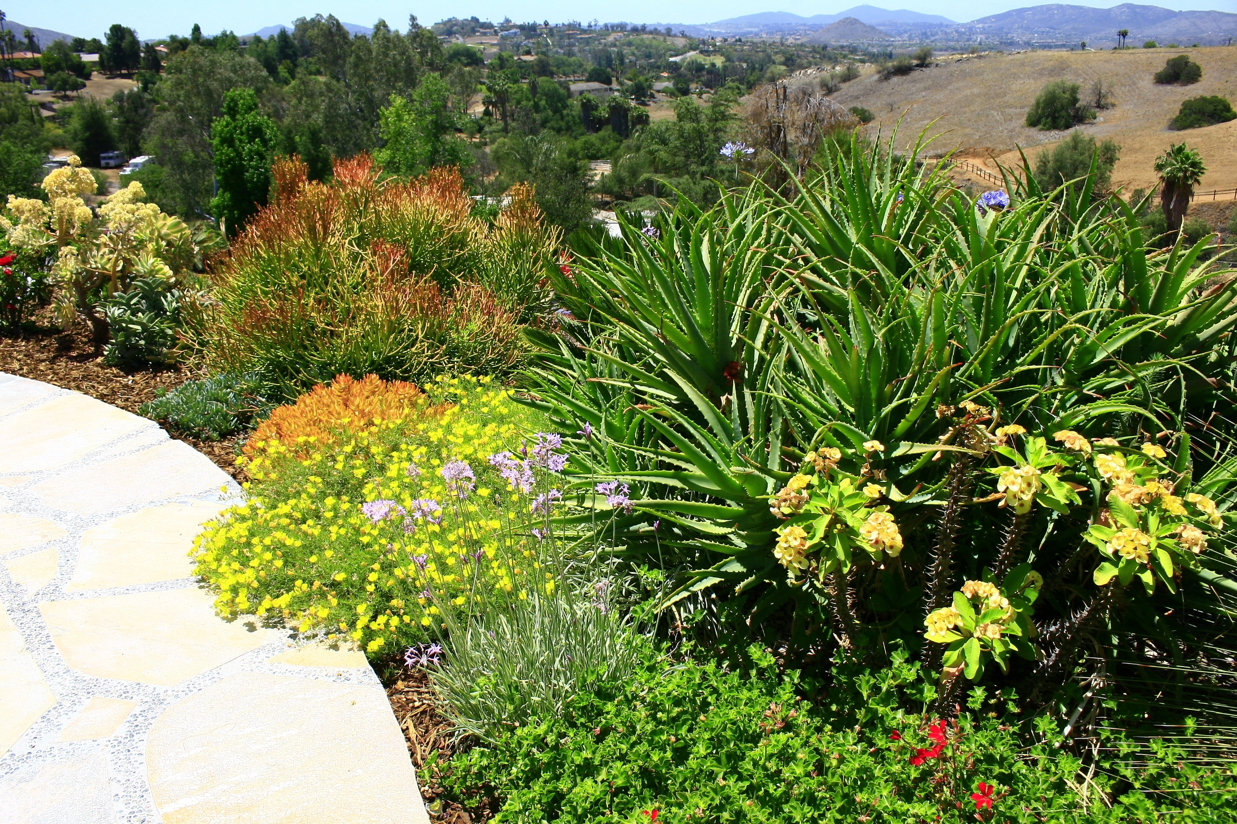 Image of: Landscape Design San Diego Ca Landscaping San Diego Ca Ideas Pertaining To Landscaping With Succulents Landscaping With Succulents Plant Ideas