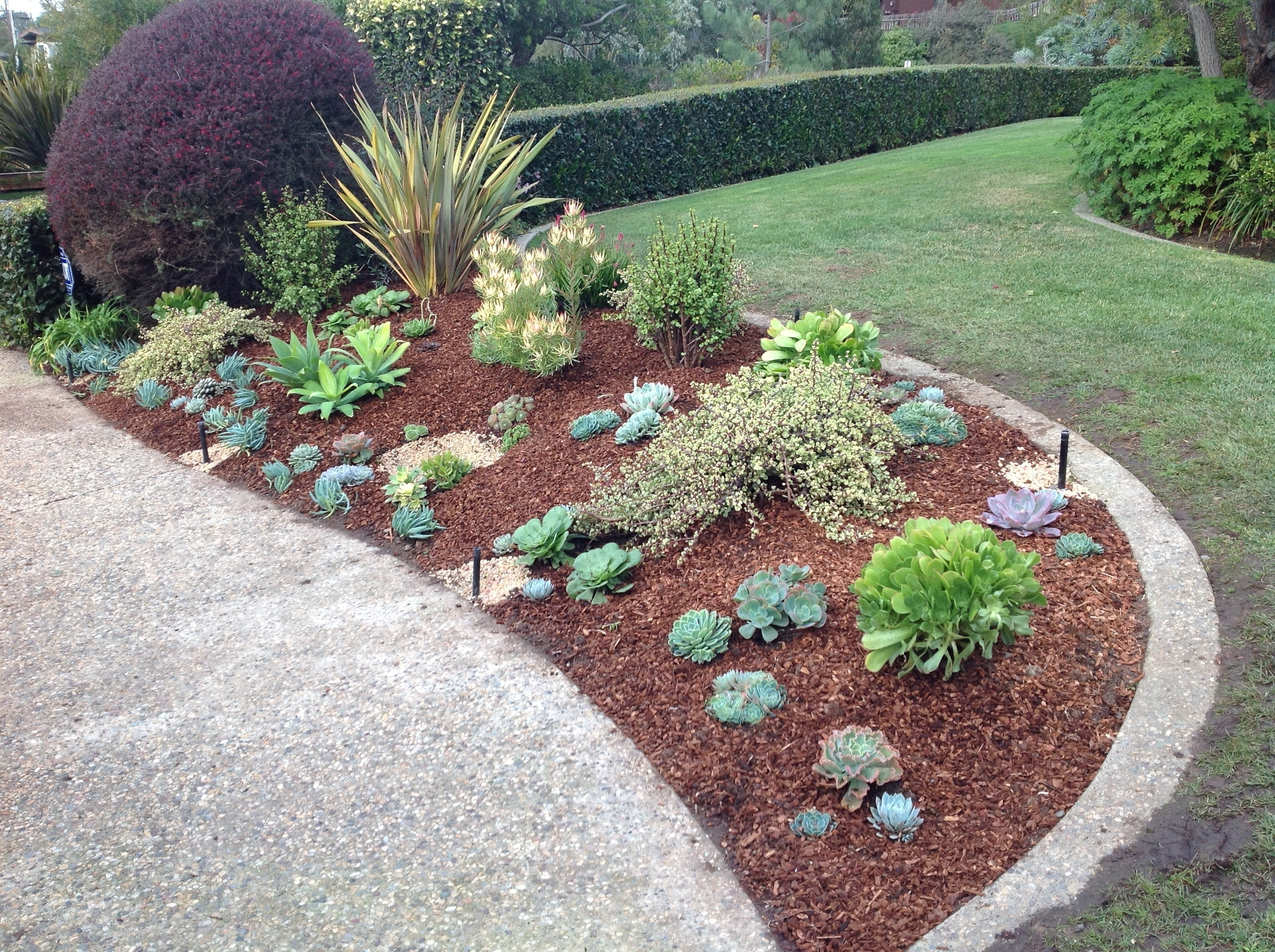 Landscaping Succulents Succulent Rock Garden With Pictures Designs Regarding Landscaping With Succulents Landscaping With Succulents Plant Ideas