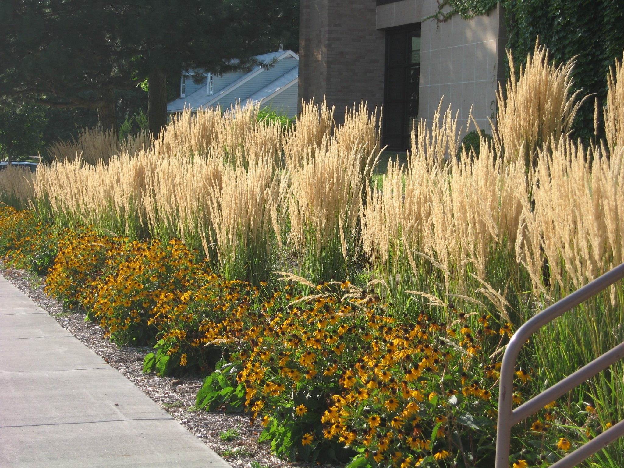 Image of: Ornamental Grasses Are Expected To Continue To Dominate In 2015 Within Landscaping Grasses Landscaping Grasses For Backyard