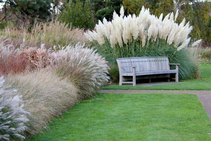 Spring Gardening Tips For Ornamental Grasses Goffle Brook Farms Pertaining To Landscaping Grasses Landscaping Grasses For Backyard