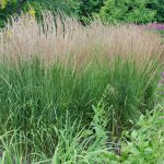Three Mid Sized Ornamental Grasses For Small Gardens What Grows With Landscaping Grasses Landscaping Grasses For Backyard