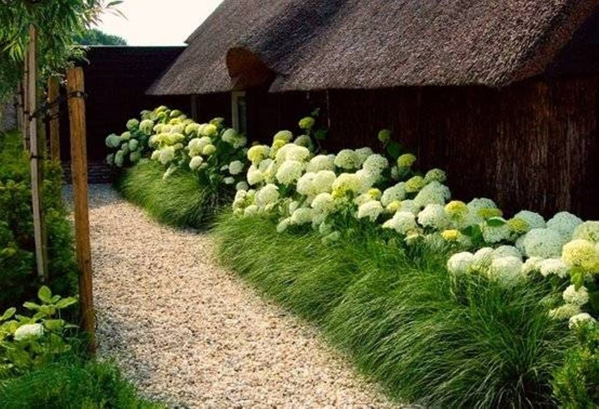 Image of: Beautiful Ornamental Grasses Landscaping Xtend Studio Throughout Landscaping With Hydrangeas Landscaping With Hydrangeas Ideas