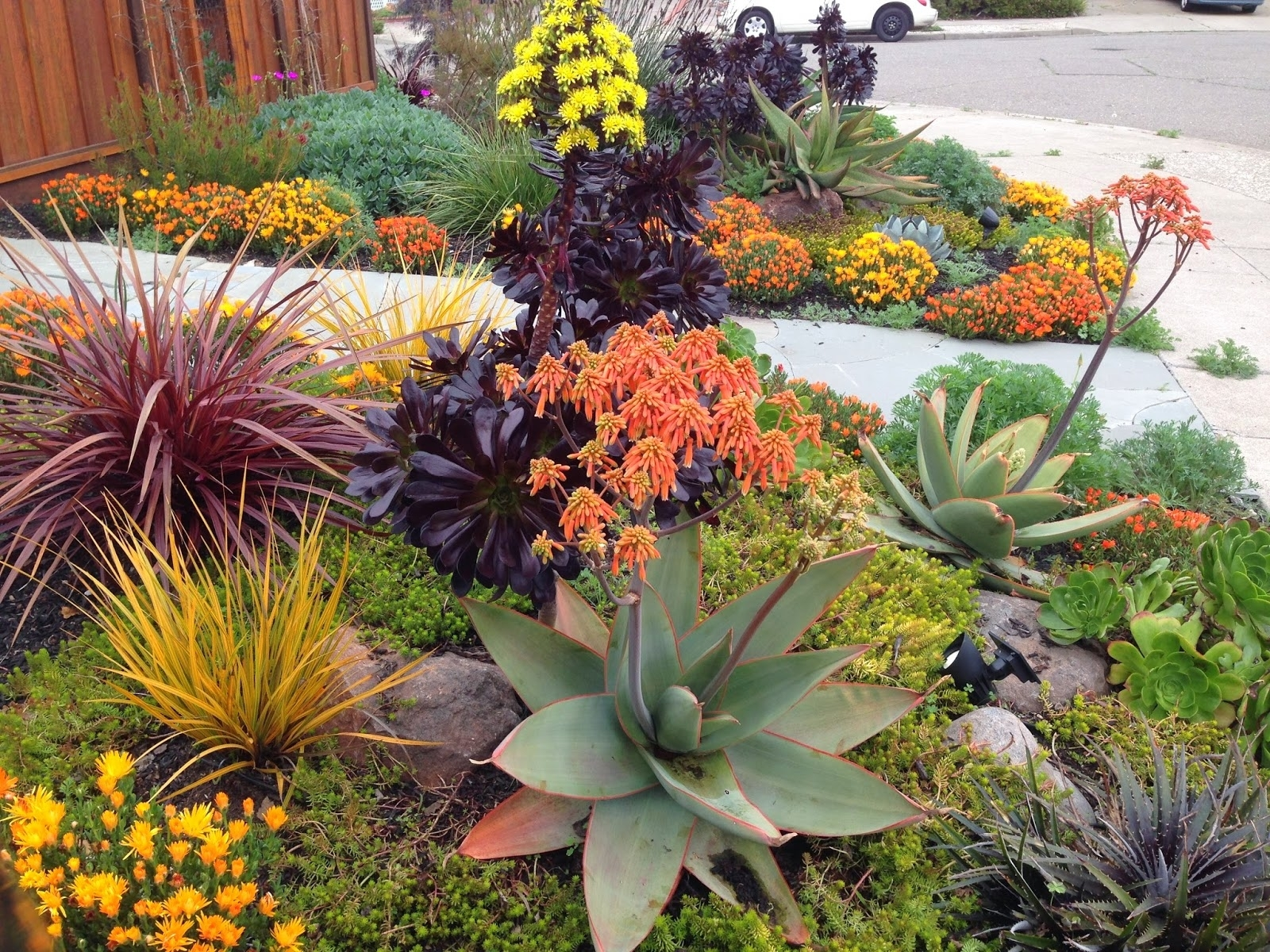 Image of: Best 10 Drought Resistant Landscaping Ideas On Pinterest Inside Drought Friendly Landscaping Create Beautiful Drought Friendly Landscaping