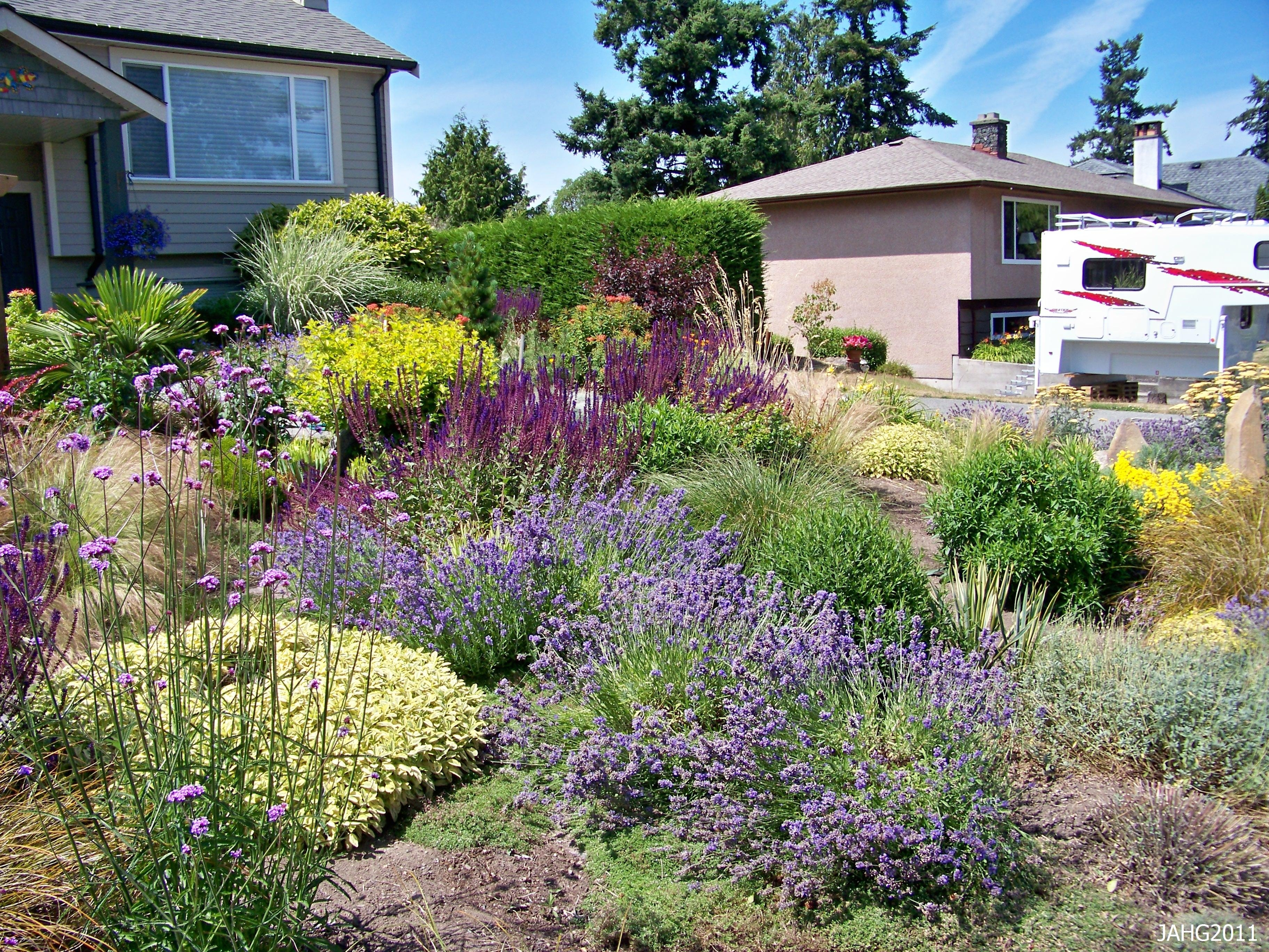 Image of: Chic Ideas Nice Drought Tolerant Landscape Design