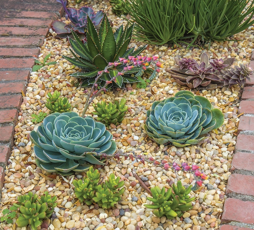 Image of: Create A Budget Friendly Home Landscape Valley News For Drought Tolerant Landscaping Amazing Drought Tolerant Landscaping
