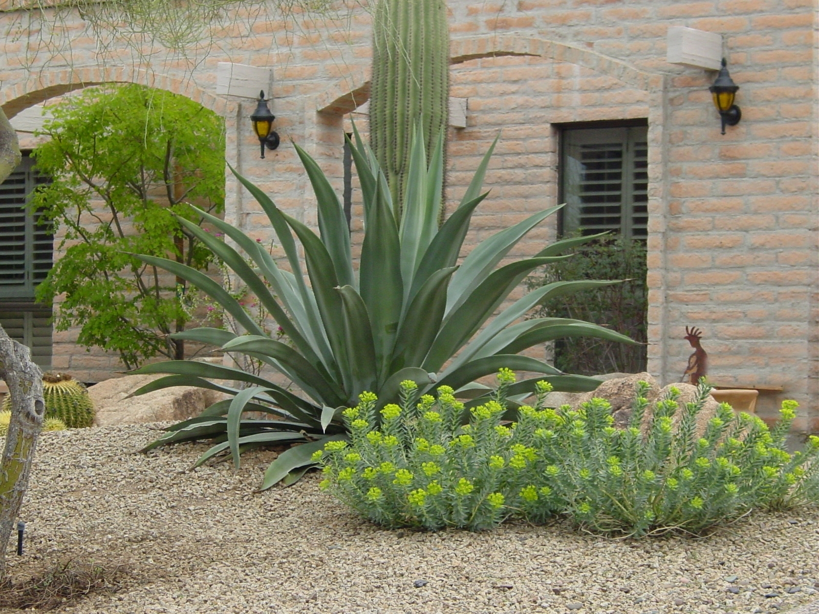 Image of: Curing The Garden Blahsform And Texture Ramblings From A With Desert Landscaping Plants Ideal Desert Landscaping Plants At Home