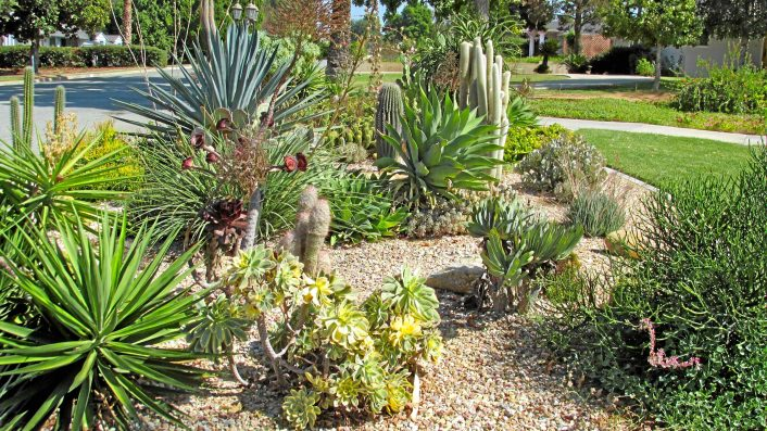 Great Drought Resistant Landscaping Pertaining To Affordable Drought Landscaping