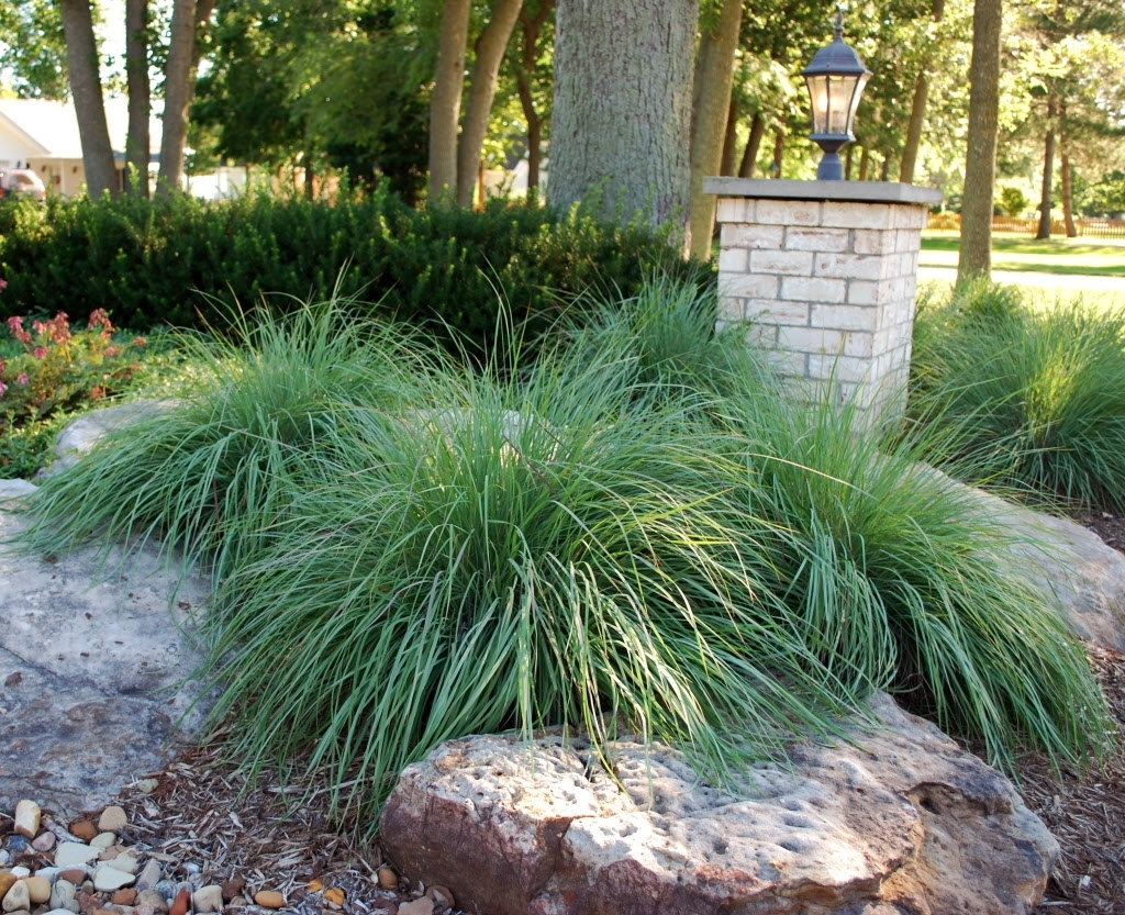 Image of: Landscaping Care Using Ground Cover With Nice Drought Tolerant Landscape Design
