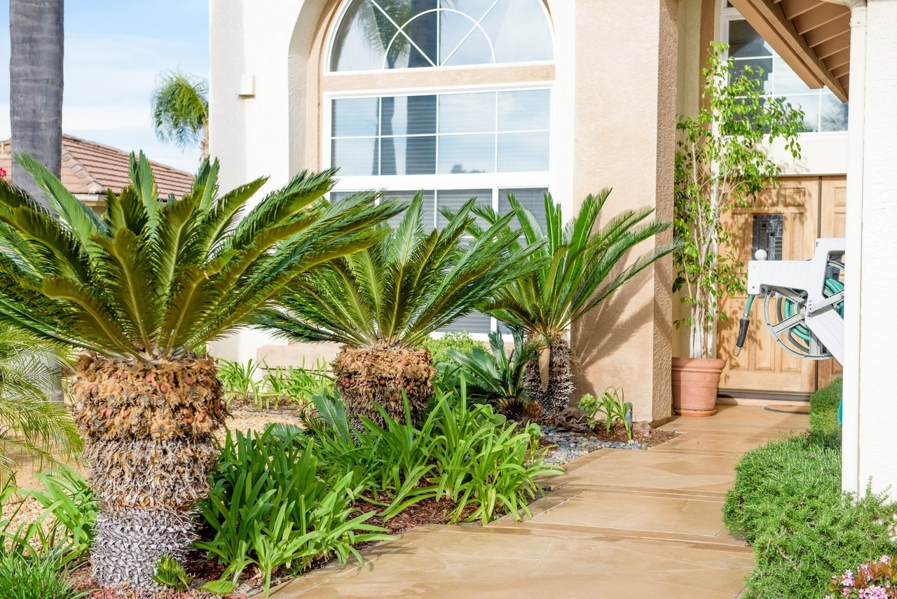 Image of: Xeriscapes Water Wise Landscapes With Affordable Drought Landscaping