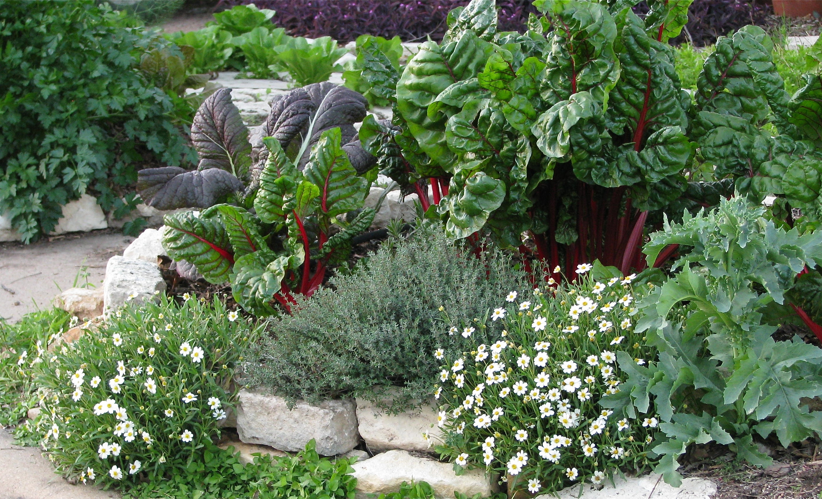 Image of: Edible Landscapes Be The Change For Edible Landscape Design Good Ideas Edible Landscape Design