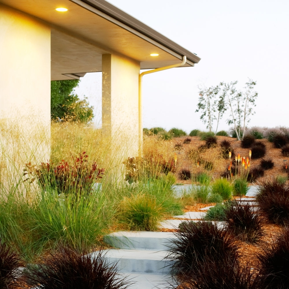 Image of: Fall Garden Plan Sunset For Grasses For Landscaping Special Ideas Grasses For Landscaping