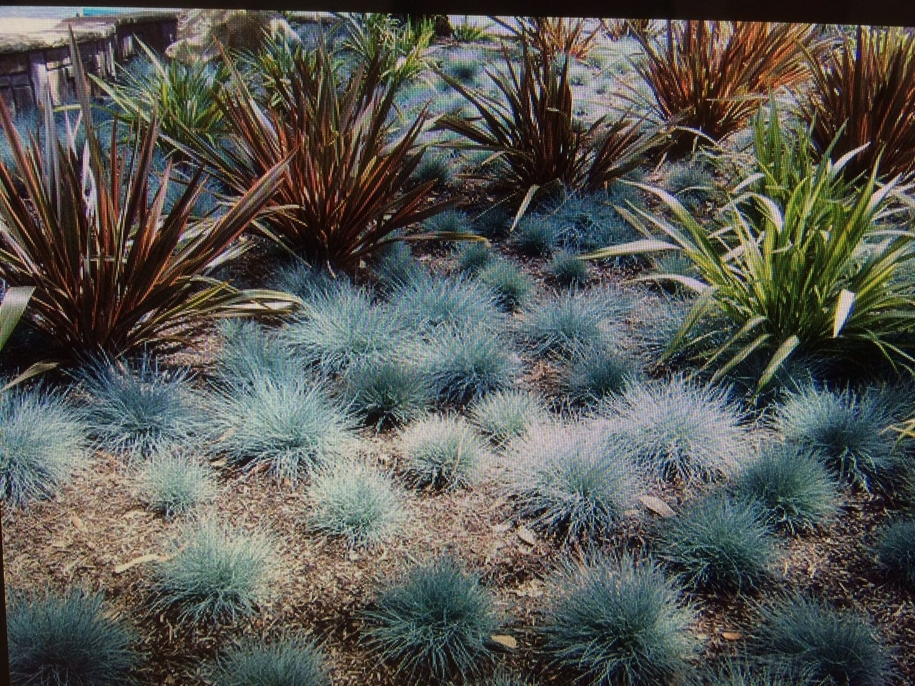 Fireman Design And Landscape Designing The Dream In Desert Landscaping Plants Ideal Desert Landscaping Plants At Home