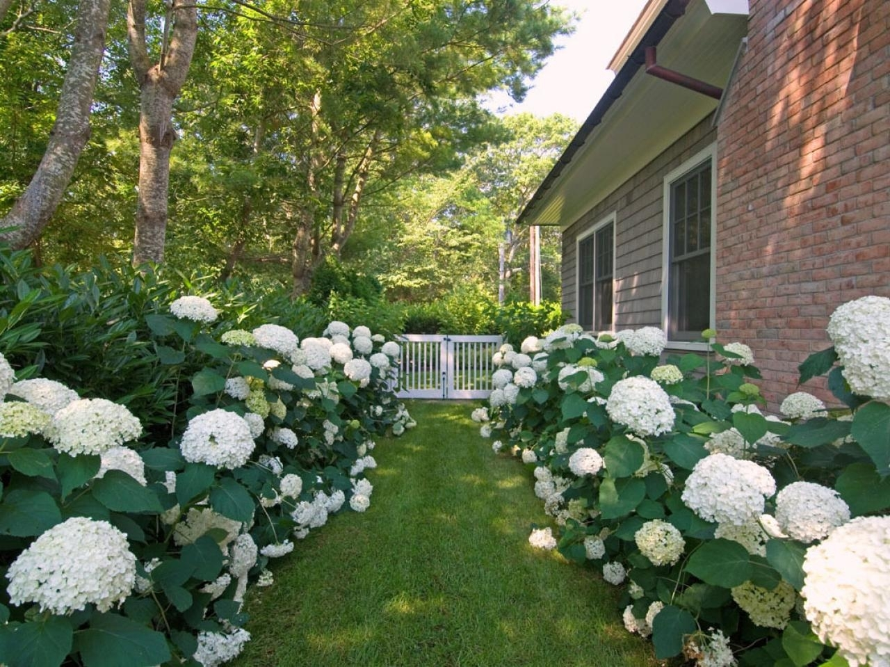 Image of: Hydrangea Garden Diy Throughout Landscaping With Hydrangeas Landscaping With Hydrangeas Ideas