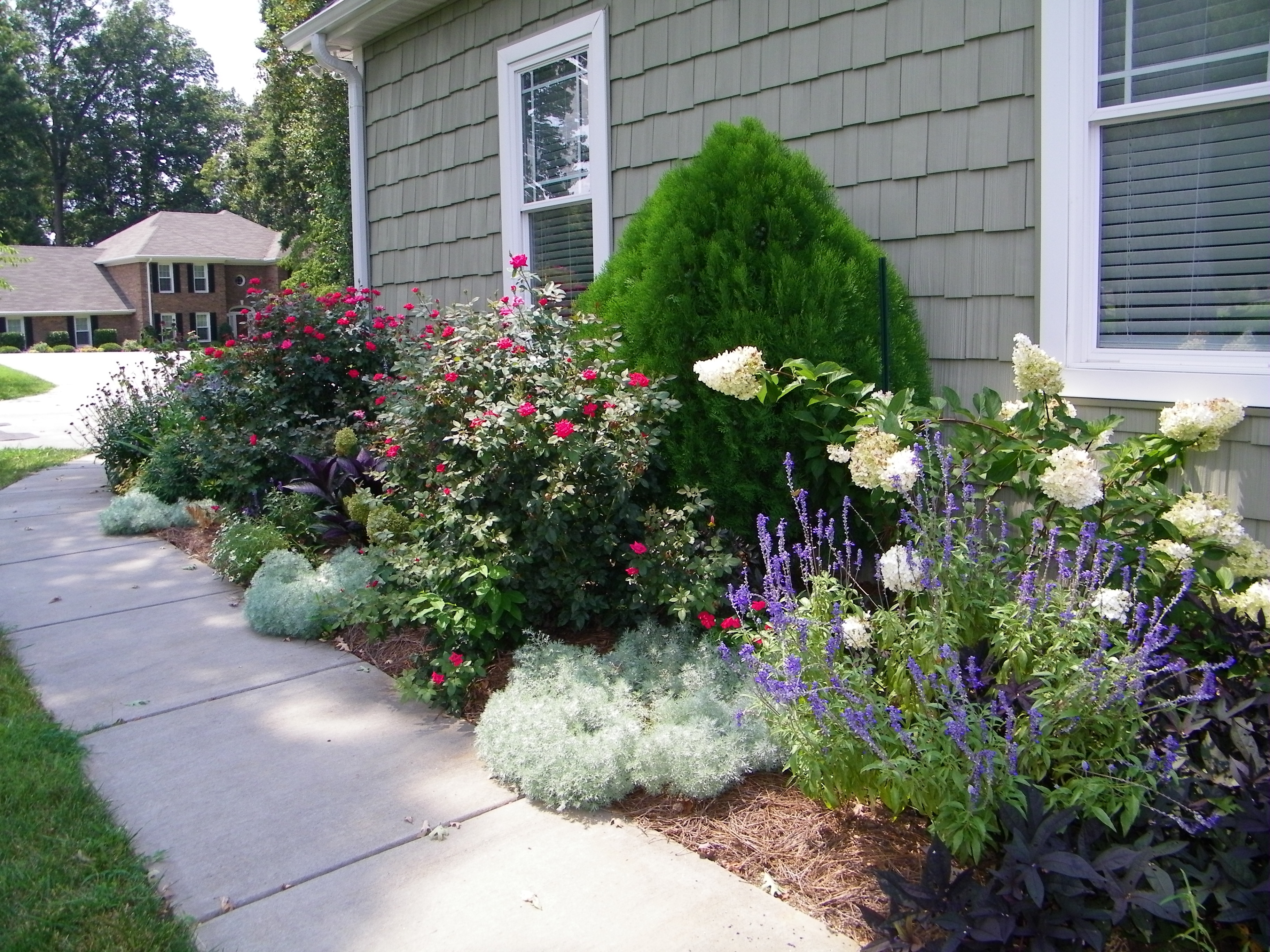 Image of: Hydrangea Landscape Roses Vanilla Strawberry Hydrangea With For Landscaping With Hydrangeas Landscaping With Hydrangeas Ideas