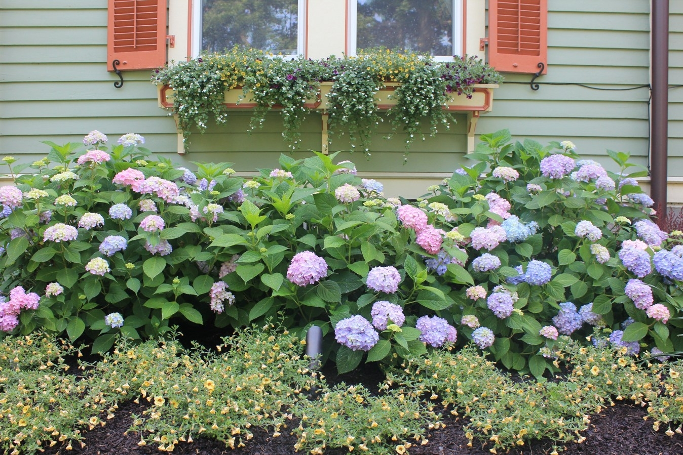 Image of: Hydrangeas In A Ridgefield Ct Landscape Renovation Throughout Landscaping With Hydrangeas Landscaping With Hydrangeas Ideas