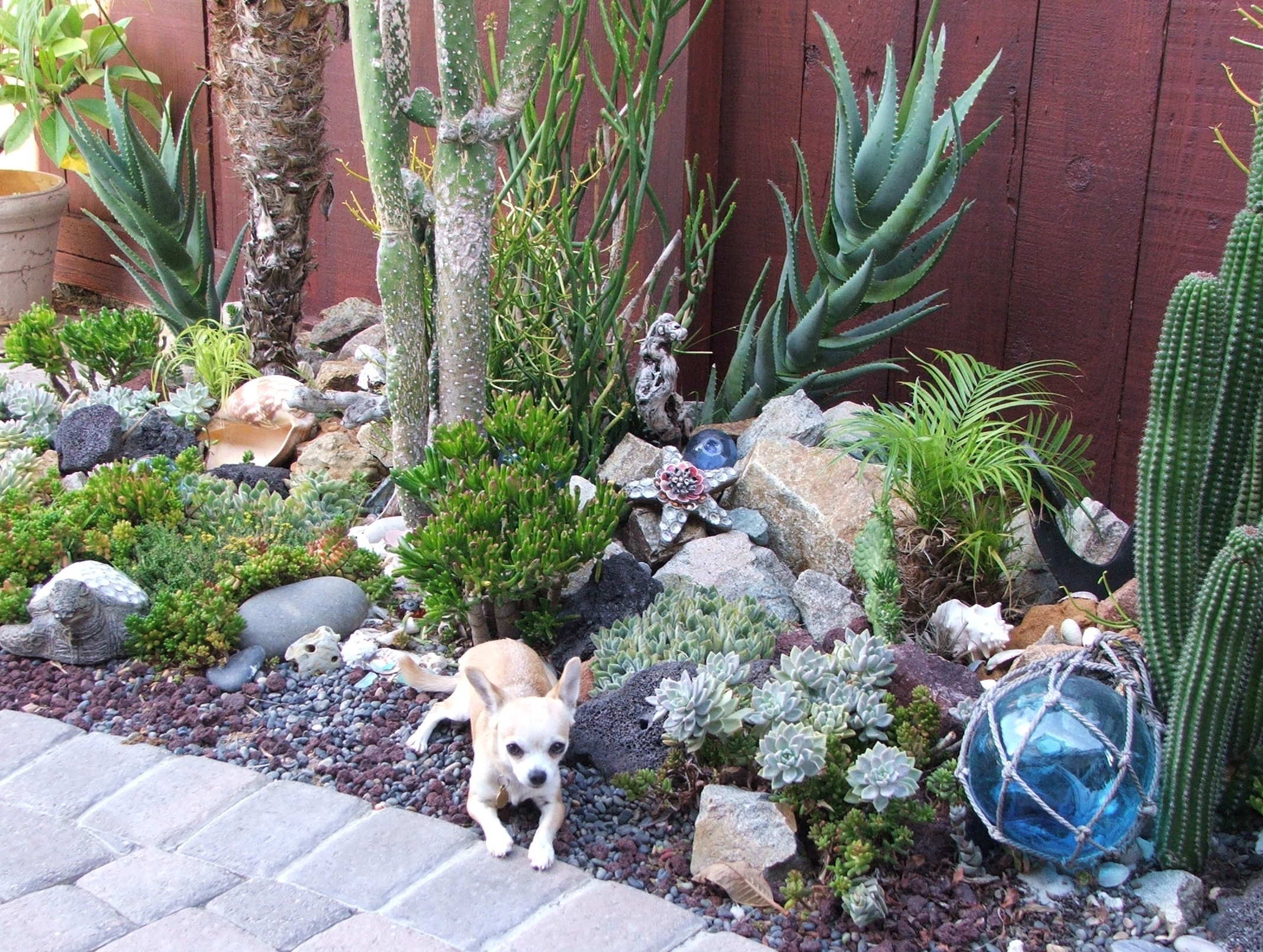 Image of: Inspirations Perennial Succulents Drought Resistant Yards With Regard To Drought Friendly Landscaping Create Beautiful Drought Friendly Landscaping