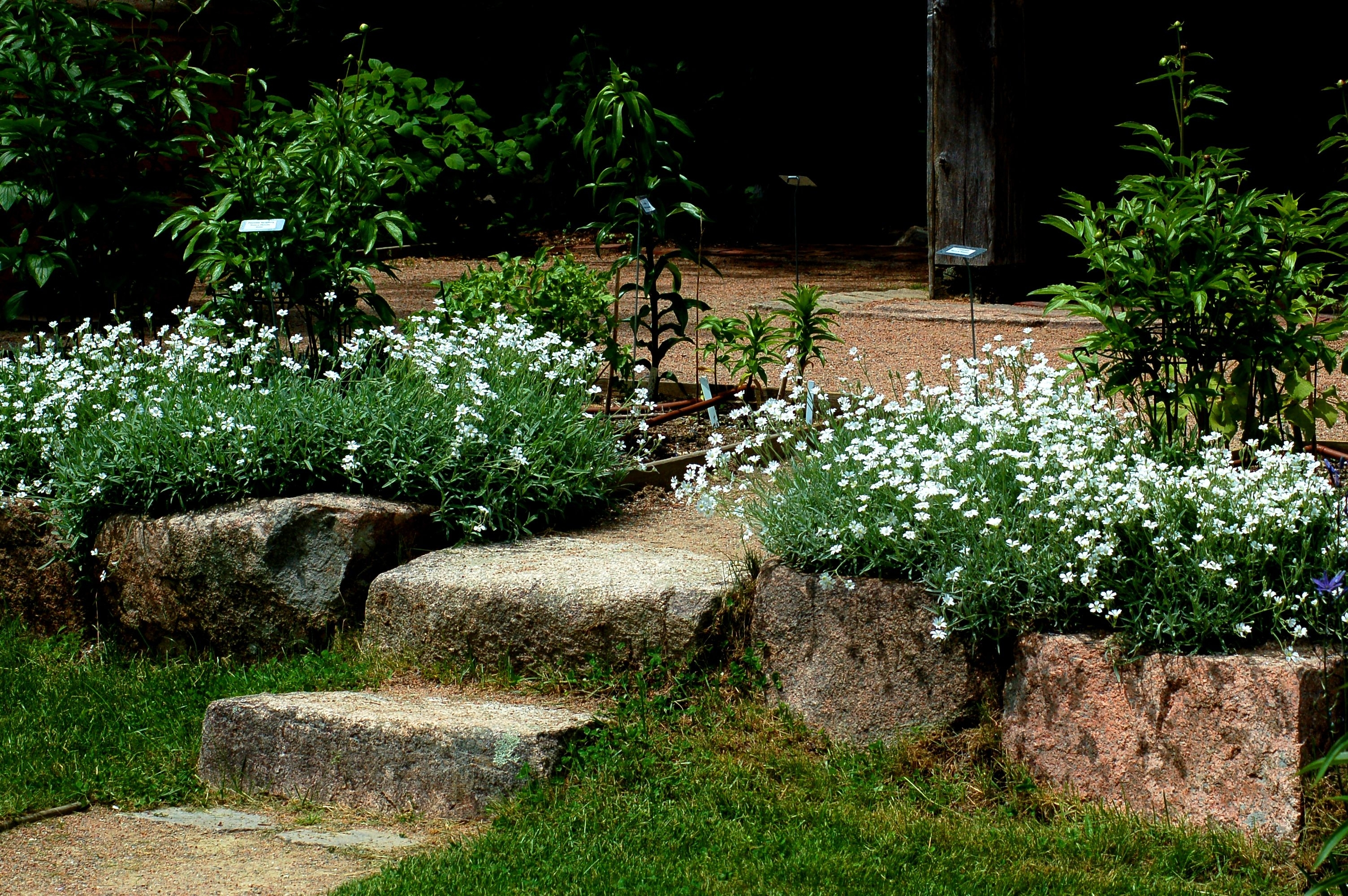 Landscaping Advice Pertaining To Best Landscaping Plants Best Landscaping Plants And Trees