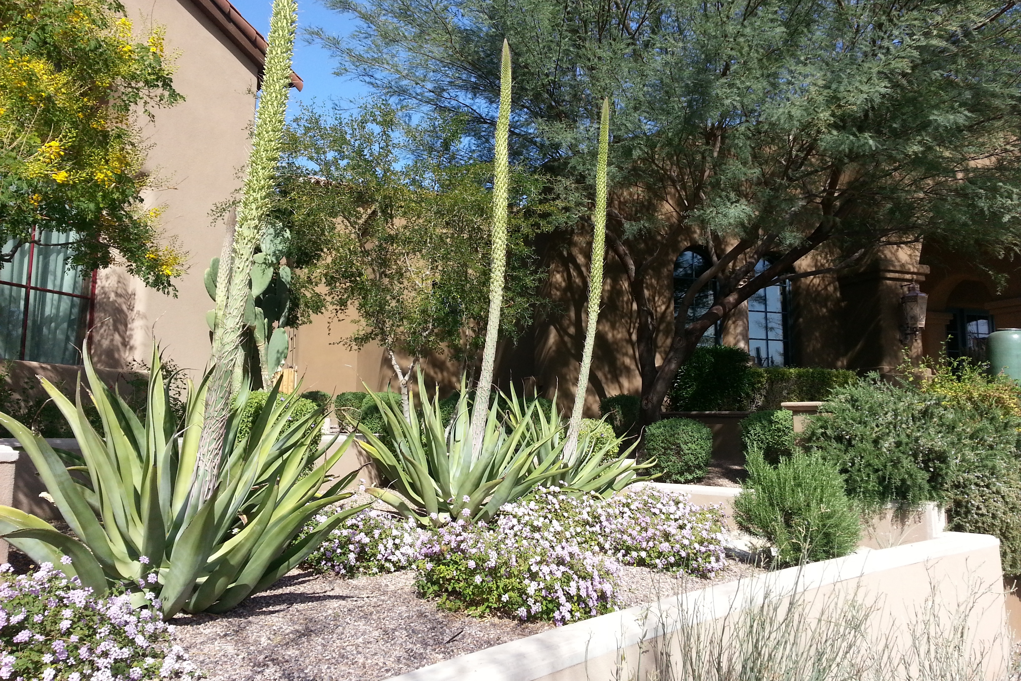 Image of: Landscaping In The Desert The Agave Century Plant Allison Throughout Desert Landscaping Plants Ideal Desert Landscaping Plants At Home