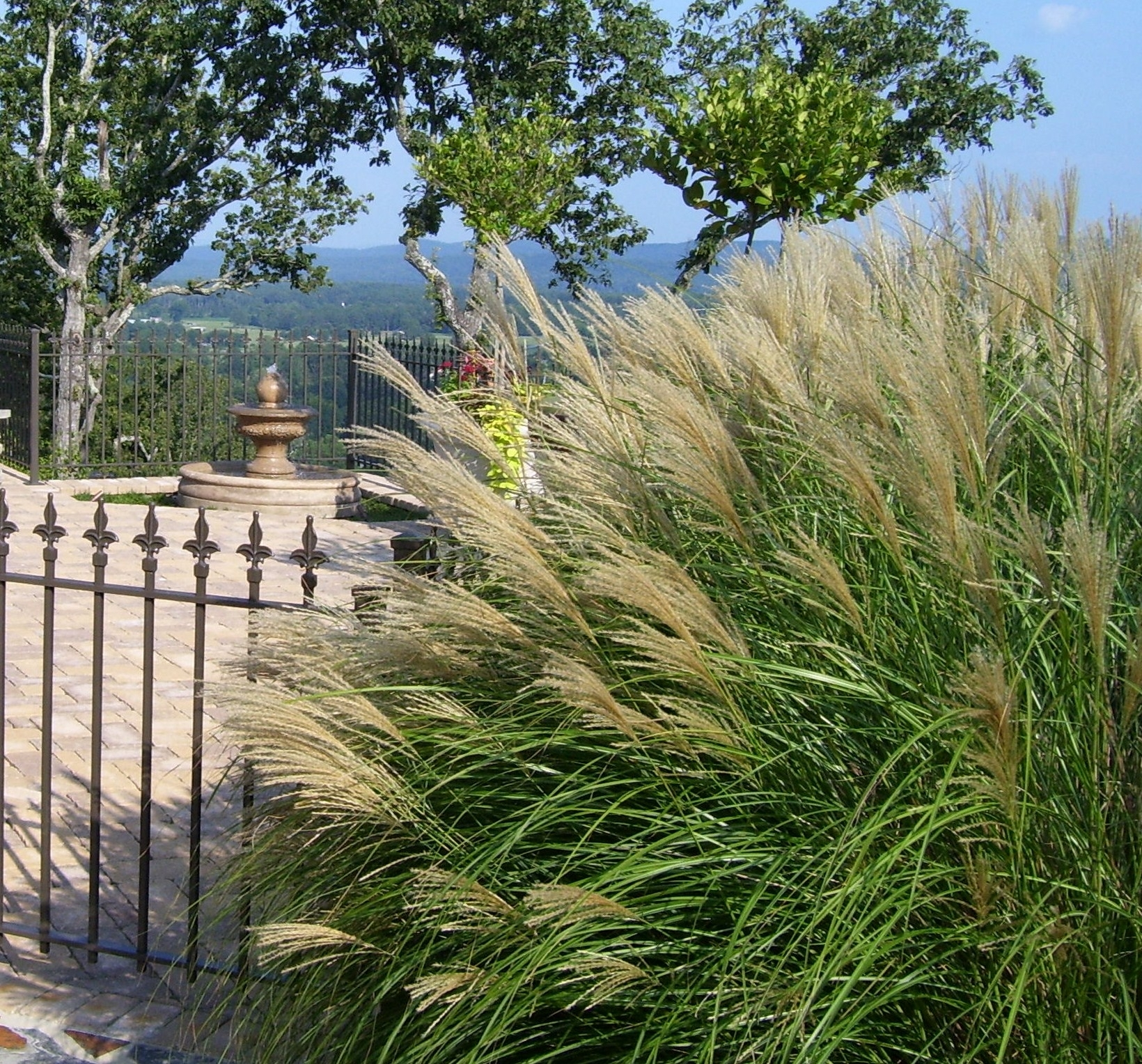 Image of: Landscaping With Maiden Grass Maiden Hair Grass Landscape With Regard To Grasses For Landscaping Special Ideas Grasses For Landscaping