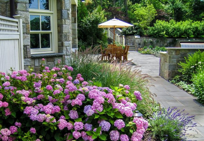 Montclair Nj Landscape Designbuild Clc Landscape Design Throughout Landscaping With Hydrangeas Landscaping With Hydrangeas Ideas